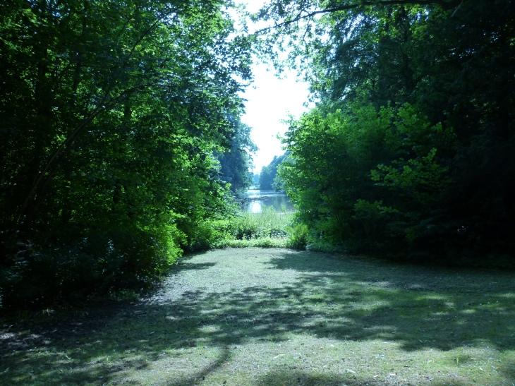 Vers l'étang.