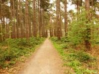 Un sentier s'enfonce dans le bois.