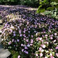 Une avalanche de fleurs.