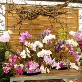 Montage d'orchidées.
