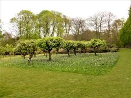 un carré d'arbres centenaires