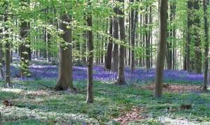 Bois de Halle en avril.