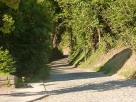 Sentier ombragé à Neerpede.